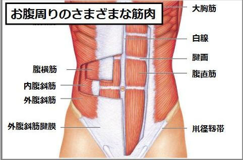 腹筋の種類のイラスト